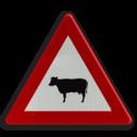 Verkeersbord A29: Doortocht van vee. Verkeersbord België A29 - Doortocht van groot wild A29 pas op, let op, J28, koeien, schapen